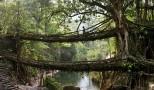 As Pontes Vivas de Meghalaya